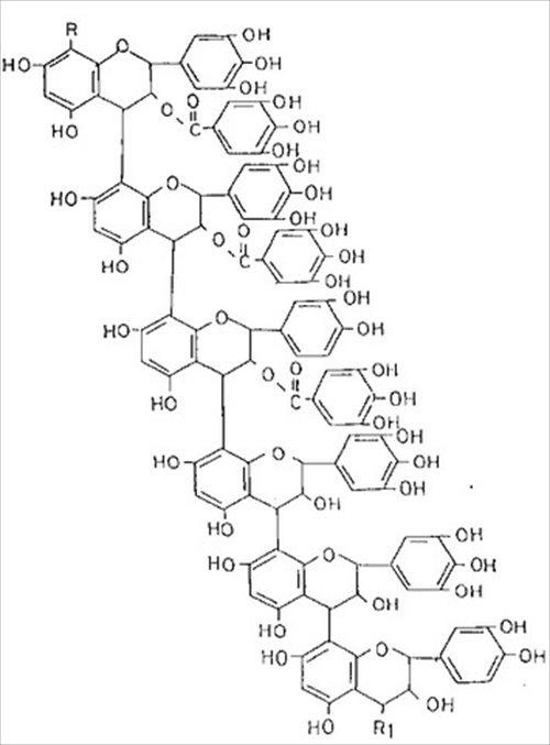 柿タンニンの推定科学構造式