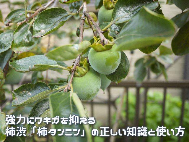 強力にワキガを抑える柿渋「柿タンニン」の正しい知識と使い方